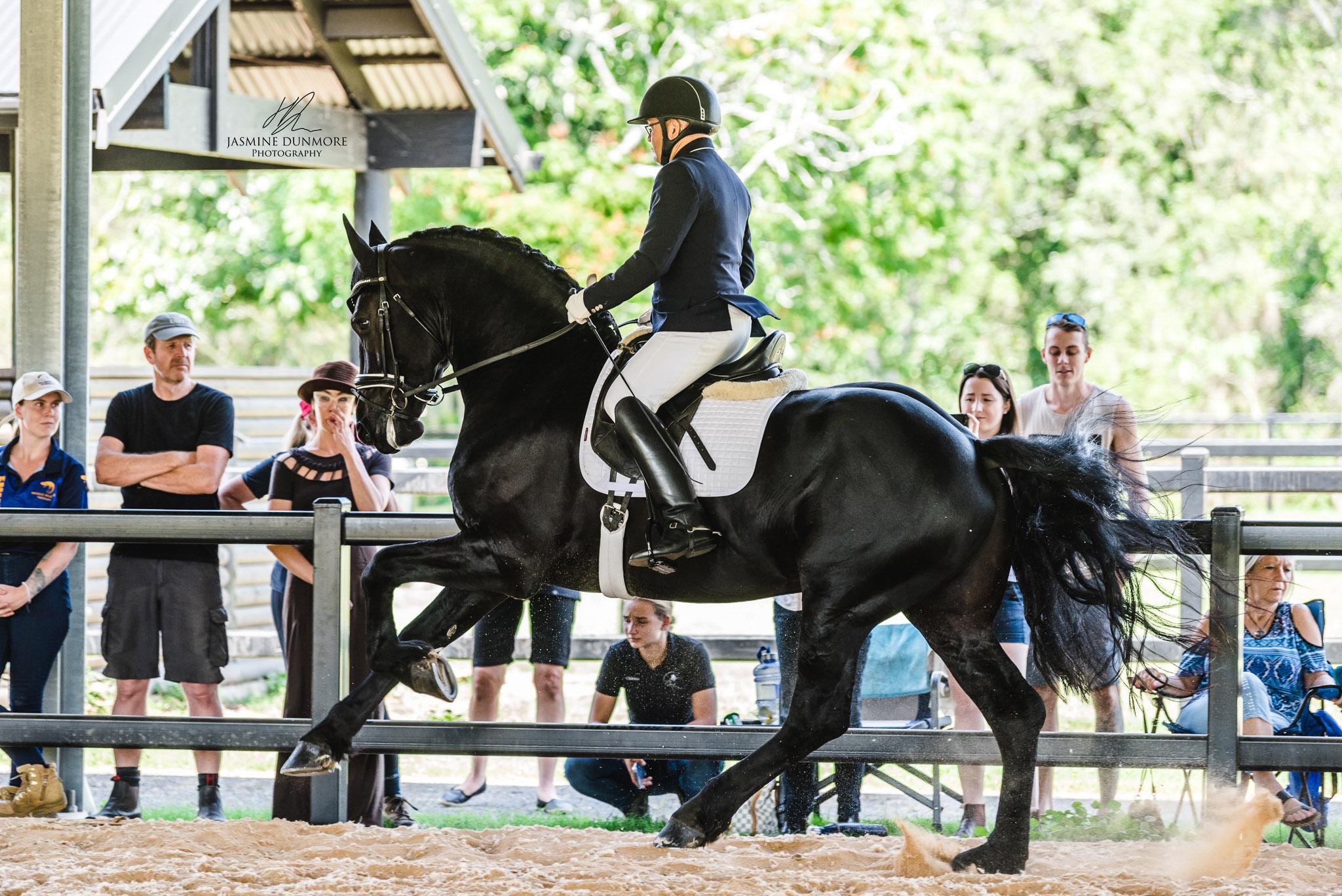 Van Demears Friesians | Friesian Horse Breeding Tamborine QLD